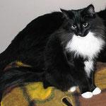Sir Galahad 8 Monate alt