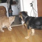 Pierroth 7 Jahre  alt mit Mischlingshund Balu
