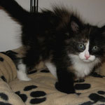 Lyra 8 Wochen alt