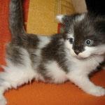 Calypso 4 Wochen alt