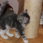 Hieronymus 6 Wochen alt