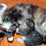 Olympia  5 Jahre und 3 Monate alt  mit Töchterchen Diana 23 Tage alt