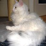 Noshi  1 Jahr und 5 Monate alt