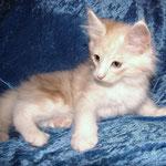 Wallace 10 Wochen alt