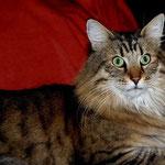 Peppone 6 Jahre und 1 Monat alt