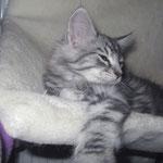 Fidelio 12 Wochen alt