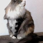 Olympia  5 Jahre und 8 Monate alt