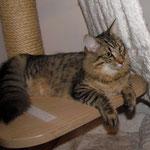 Peppone 7 Monate alt