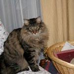 Humphrey 10 Monate alt