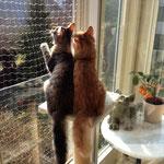 Tomcat und Tarzan 3 Monate alt