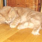 Pierroth 6,5 Jahre  alt