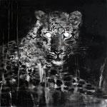 Leo 40x40 cm Oil/Canvas 2011