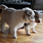 Kidd und Teddy