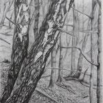 Eifelfrühling (2011, Bleistift/Papier, 30x42 cm)
