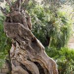 Alter Olivenbaum im Zentrum von Palma