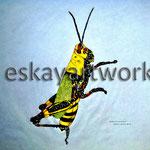 tropic grasshopper | 1998