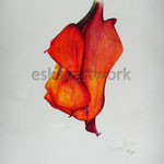 red flower | 2001