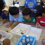 標本に使う水生生物の品定め中1