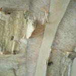 Zurück nach Natur III  30x30 / Acryl und Baumrinde ---CHF200---