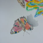 """Detail vom """"Where get the butterfly...his color"""""""
