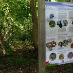 Bildtafel der Vogelarten - Foto P. Welker