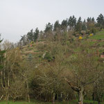 Gärtchen mit ehemaligen Weinbergmauern