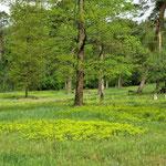 ...viele bekannte oder weniger bekannte Pflanzen