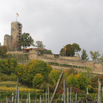 Hoch über Wachenheim: Die immer noch beeindruckende Burgruine (bewirtschaftet) bei Wachenheim