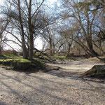 Amphibische Landschaften: Trocken - Bild: Ingo Pedal