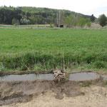 Flschwasserbecken der Fam. Barron (1b)