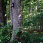 Fledermauskästen am Waldrand