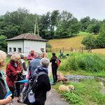 Im Feuchtbiotop Waldwimmersbach - Foto I. Pedal