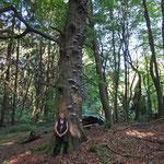 Schöne Gewächse an altem Baum (z.B. Zunderschwamm)