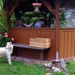 Geschützt im Pavillon - Melly muss draußen bleiben