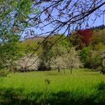 Der Frühling erblüht... - Foto P. Welker