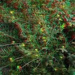 Auf den Dämmen: Wege und Ruderalpflanzen