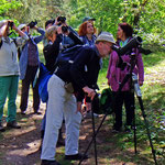 Im Spektiv: ein Gartenrotschwänzchen - Foto P. Welker