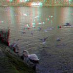 Hungrige Vögel  / Foto am 15.01.2017 von PeWe