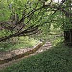 Der Wald - Schattenspender und Wasserspeicher