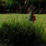 Das hohe Gras als ideales Versteck für Kitz und Ricke - Foto am 15.06.2017 von P. Welker