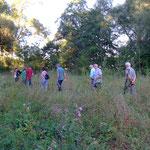 Weidenanpflanzung für zukünftige Biber in einer Elsenzschlinge
