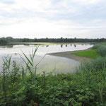 Weite Wasserflächen...   (Foto: Ingo Pedal)
