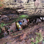 Fundsache: Vom Osterhasen zu gut versteckt