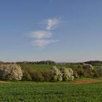 Die Obstbäume blühen - Bild: Ingo P.