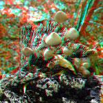 Pilze auf einer Baumleiche