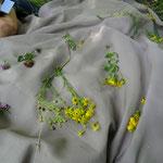Wiesenblumen sammeln und kennenlernen