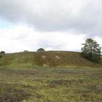 Unter Naturschutz: die große Düne in Sandhausen