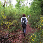 Im Ginsterwald
