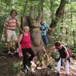 Gigantischer Hirschkäfer am Hirschkäfer-Lehrpfad (Lucanus cervus, giganteus)