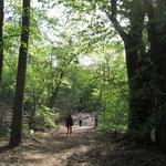 Abstand - selbst im Wald! - Foto I. Pedal
